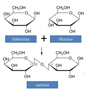 Lactosa1