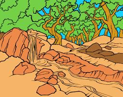 bosque mas seco